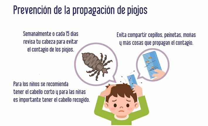 Medidas para prevenir los piojos y liendres